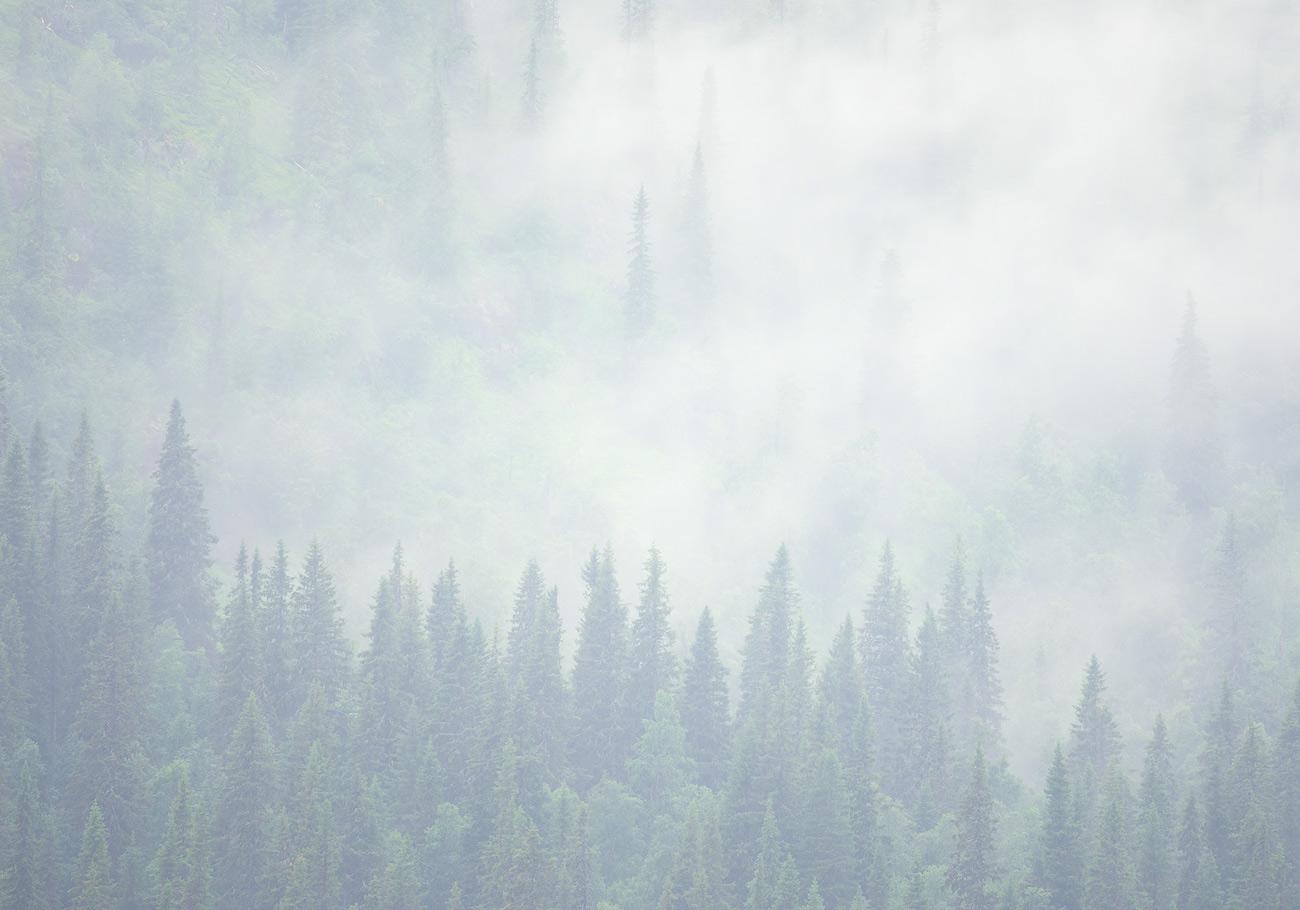 Misty forest | Frostviksfjällen, Jämtland