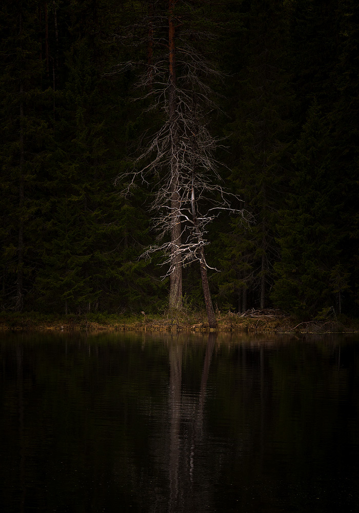 In the deep forest | Helvetesbrännan, Medelpad