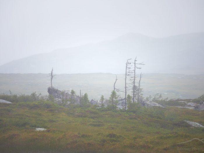 Windy hike in the beautiful Sösjöfjällen