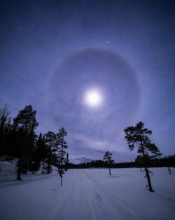 Moon Halo   Vålådalen Nature Reserve, Jämtland